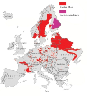 Biber_in_Europa_2003