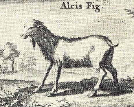 alcis-silc.herc