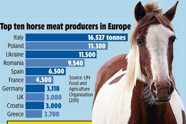 horsemeat graphic