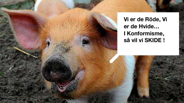 danish-protest-pig-13