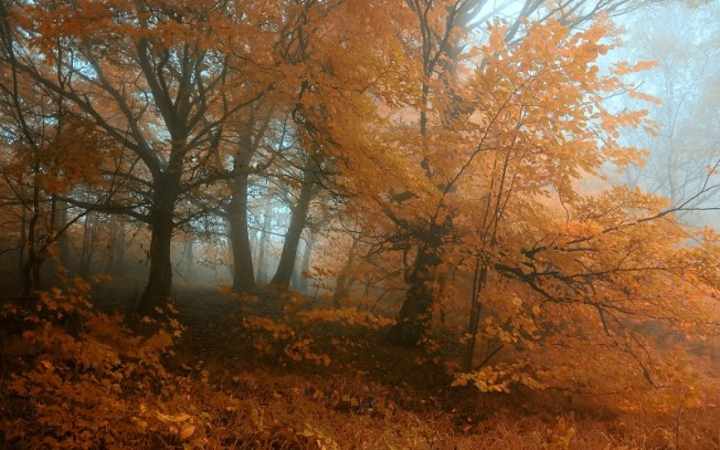 nature-landscapes-trees-forests-leaves-color-fog-mist-haze-autumn-fall-seasons-plants-grass-dew-wallpaper-220770
